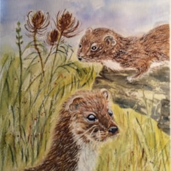 Weasels and Teasels