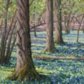 The bluebell wood, Rolvenden