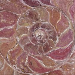 A is for Ammonite