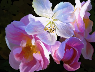 Hibiscus Roses
