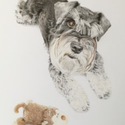 Hamish, black and silver miniature Schnauzer (and Mr Monkey)