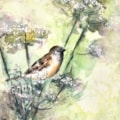 Sparrow among the hogweed