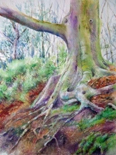 The clinging Oak