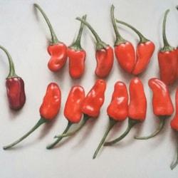 Hot Stuff 3