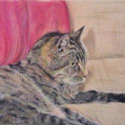 Old Angus's cat