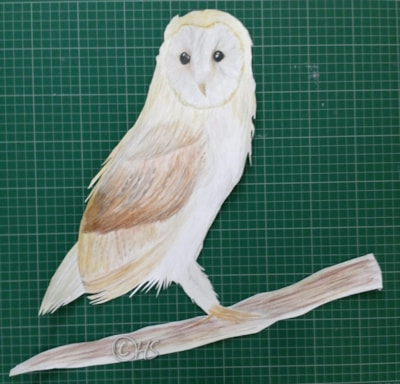 "Barn owl ""2nd go of owl pic """