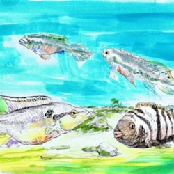 Dawning of the age of Aquarium 2