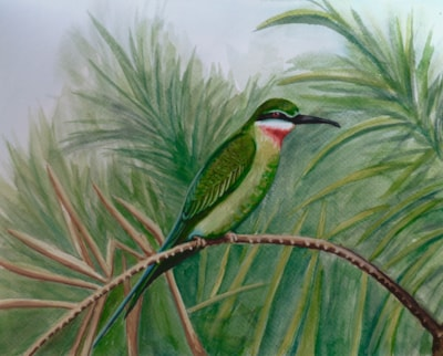 Scarlet throated bee-eater?