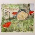 Poppies, pen and watercolour