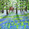 Bluebells at Warton Hall - Lytham St Annes on Sea
