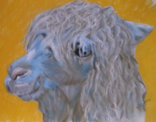 Alpaca in pastel