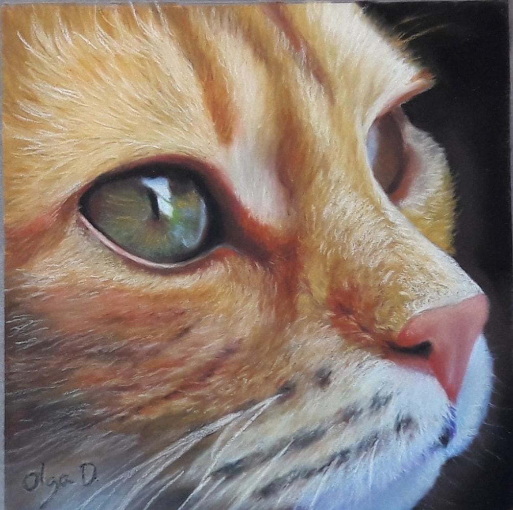 Redhead cat studio