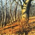 Sunlight in Connigree Wood