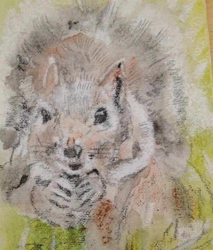 """""""Shy Squirrel"""""""