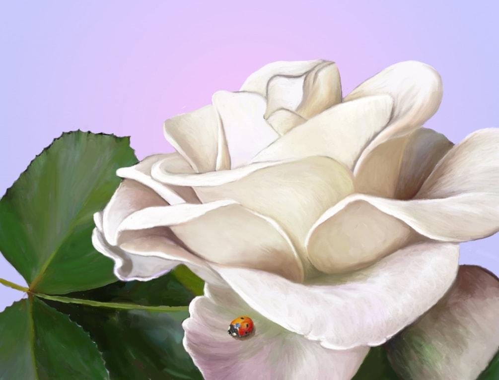 Rose'n Ladybug