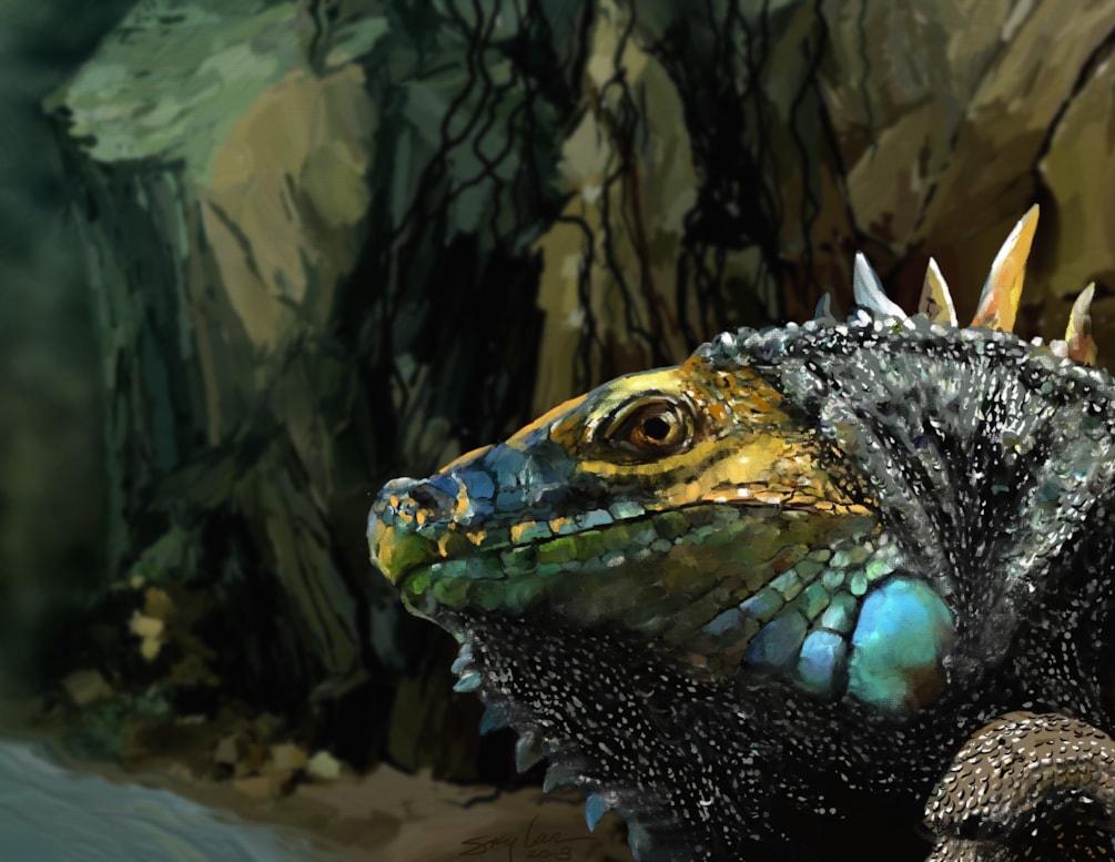 Night Of The Iguana