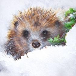 Hedgehog in winter