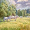 Summer pasture Rippon Hall