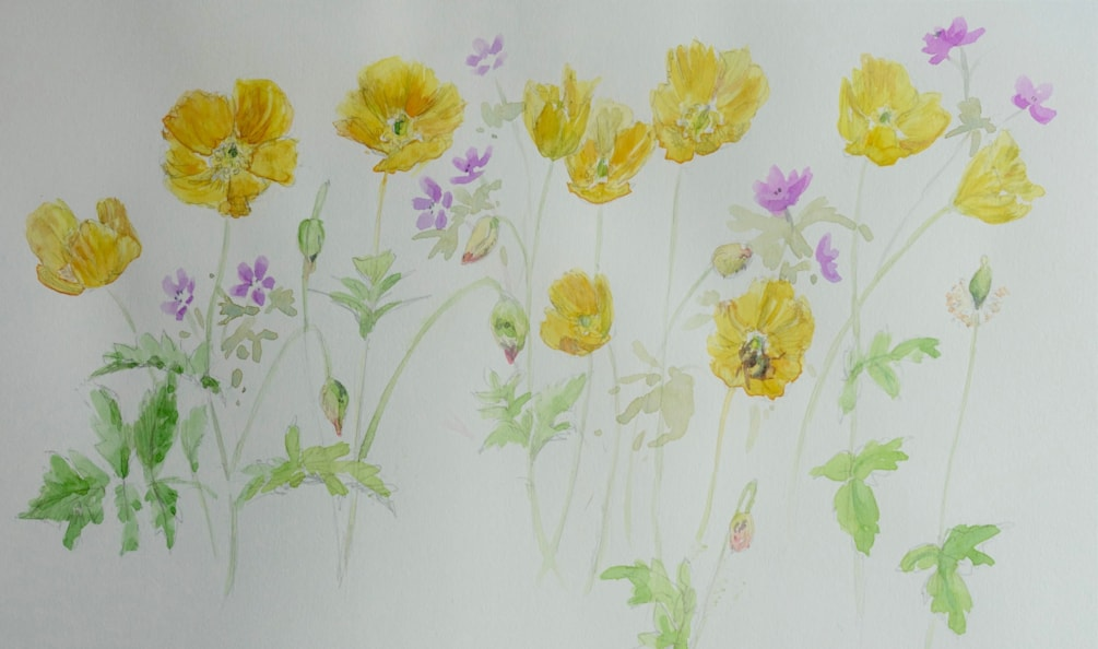 Poppies, geraniums and bumblebee