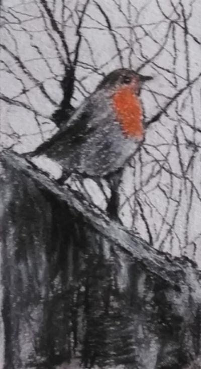A robin again.