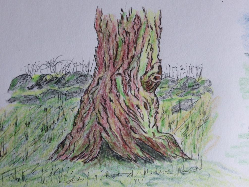 Blended stump. dip pen and Caran D'Ache coloured pencils