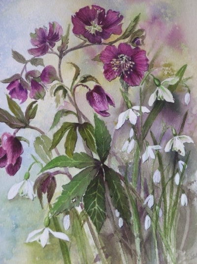 Hellebore and snowdrops