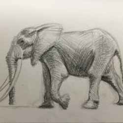 Elephant speed sketch