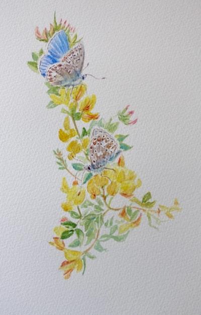 Blue butterflies on birdsfoot trefoil
