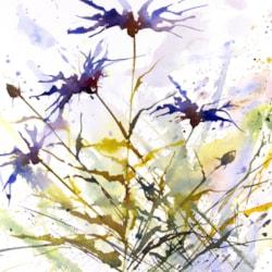 Cornflowers #3