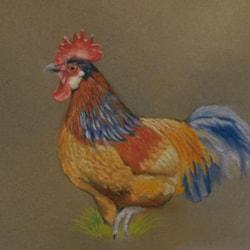 Struttering cockerel