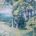 Sunlt Trees, Lincs.