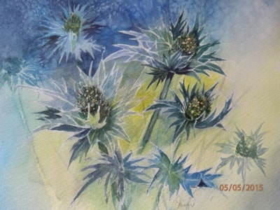 Sea Holly 2