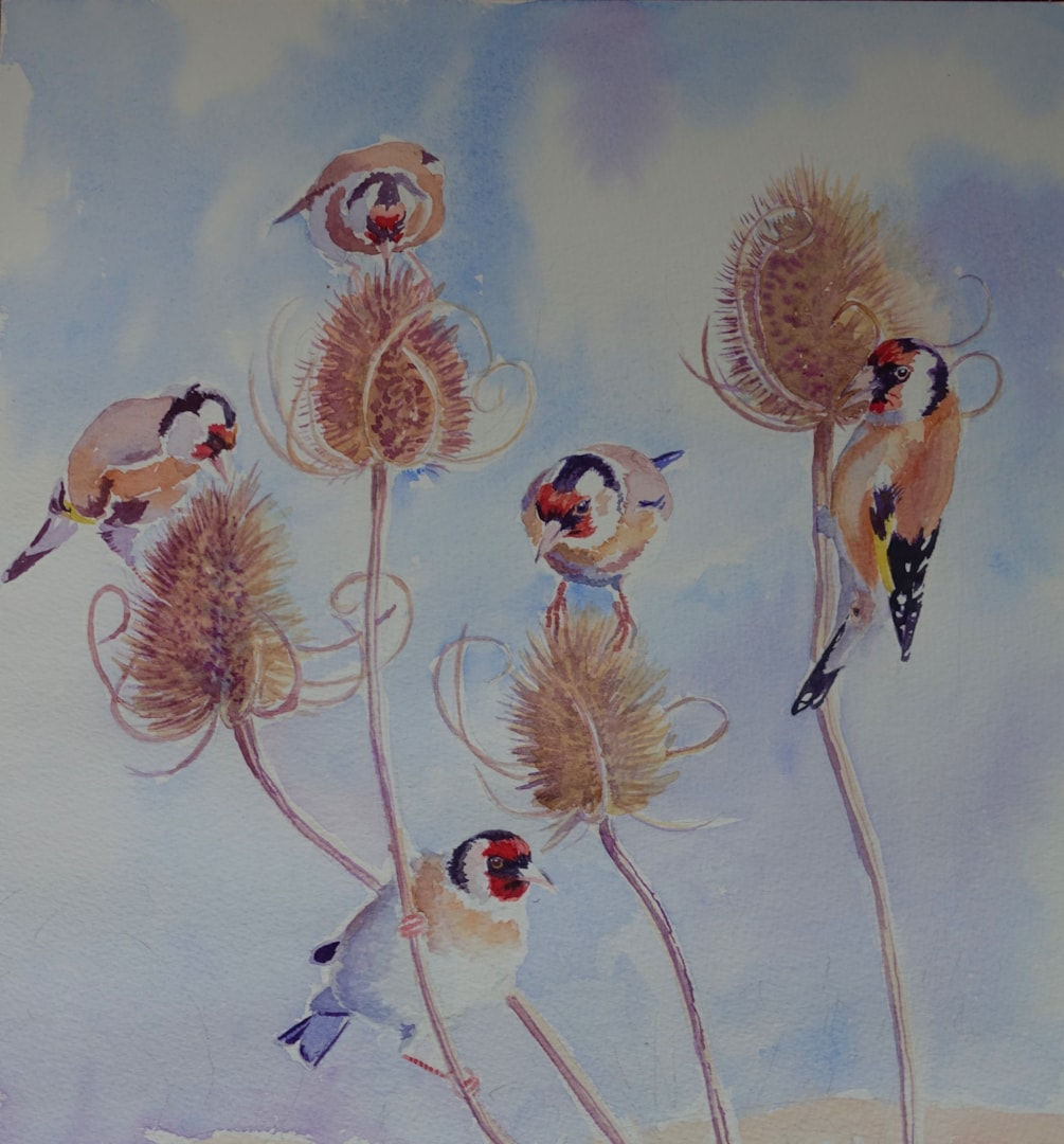 Goldfinches on teasel