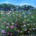Wild Flower Meadow One