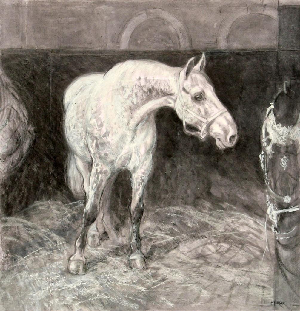 Study of a Windsor Grey