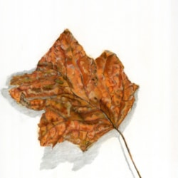 Autumn Tulip Leaf