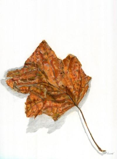 Autumn Tulip Leaf