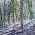 Cuckoo Woods 5