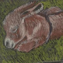 minature Donkey from paintmyphoto website