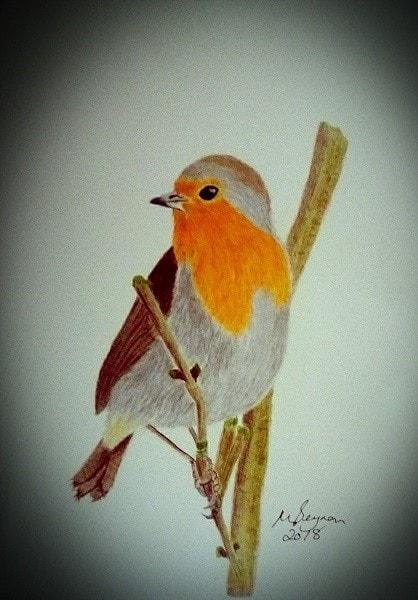 Robin Redbreast waiting for breakfast