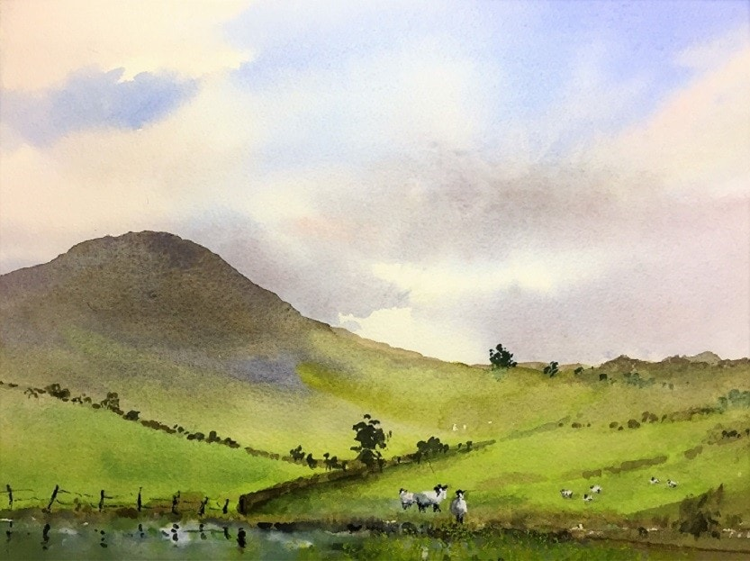 Black-headed Moorland Sheep
