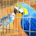 The Belligerent Budgie