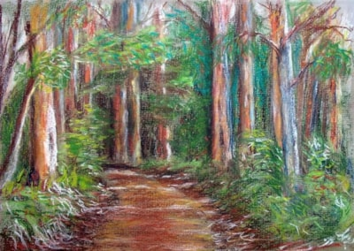Karri Forrest Sketch