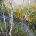 Silver Birches along the Stream