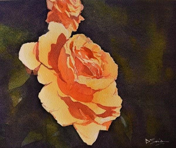 Wisley Rose