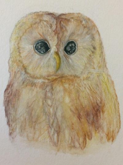 My 1st owl