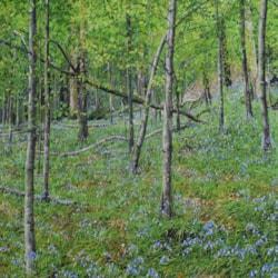 Bluebells Wye-Valley (2)