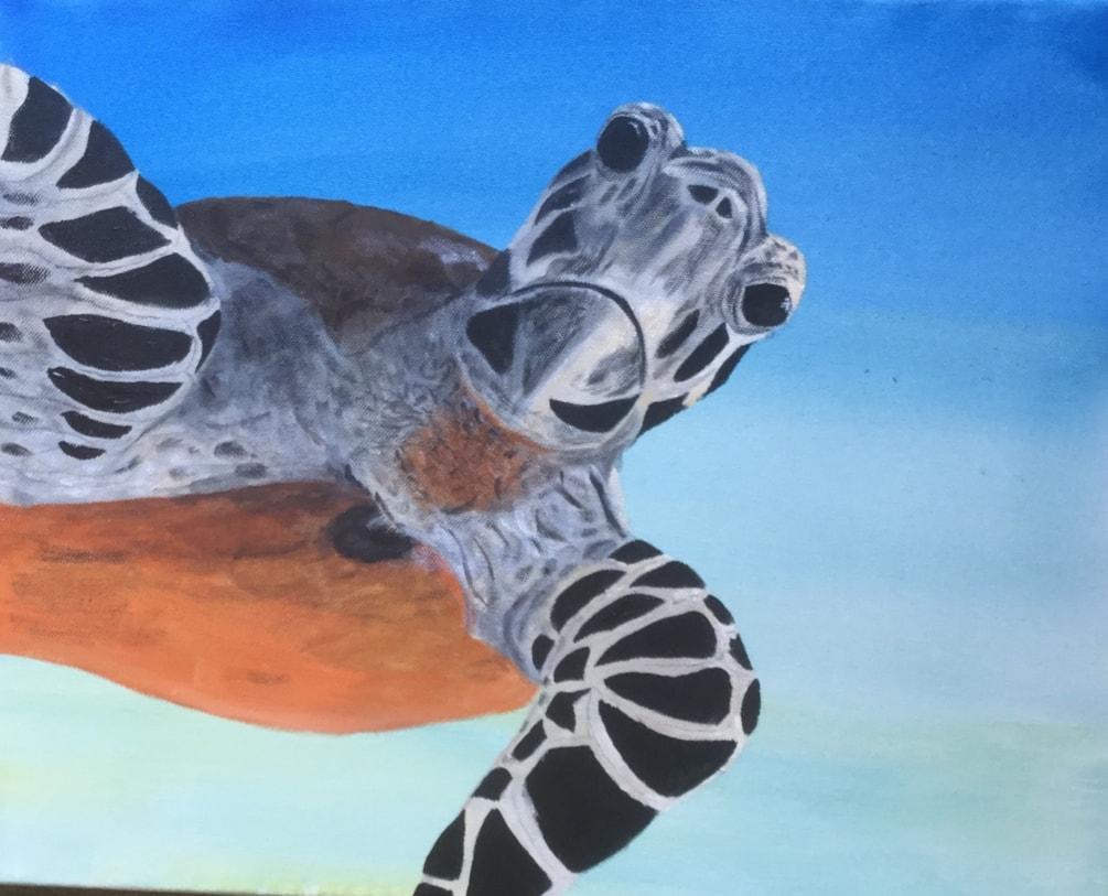 Turtle close up