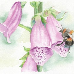 Foxgloves with bee