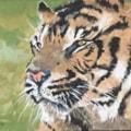 Indonesian Tiger